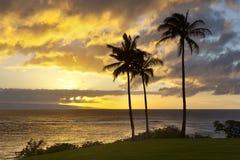 在Napili点,毛伊的棕榈树日落 免版税库存照片