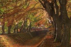在Nashigawa河,日本的槭树走廊 免版税库存照片