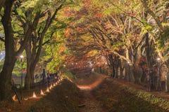 在Nashigawa河,日本的槭树走廊 图库摄影