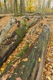 在Nationaal Park De Hoge Veluwe的秋天 免版税库存照片