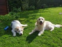 在Natur的狗 免版税库存照片