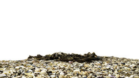 在natura的贝壳隔绝有白色背景 库存照片