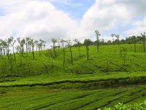 在Nelliyampathy小山,帕拉克卡德,喀拉拉,印度的茶庄园 库存照片