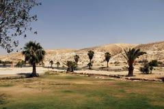 绿洲在Neqev沙漠 免版税库存图片