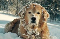 在NH的深奥的思想家小狗在风暴以后 图库摄影