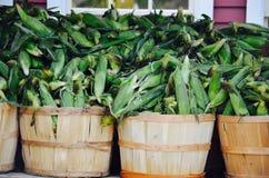 在NH的玉米棒子 免版税图库摄影