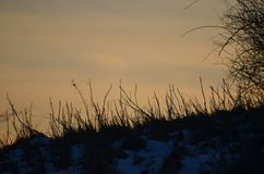 在NH的简单的日落在领域 免版税库存照片