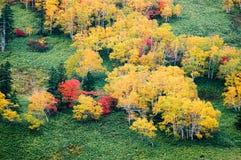 在Nissho通行证在秋天,北海道,日本的秋叶 库存图片