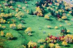 在Nissho通行证在秋天,北海道,日本的秋叶 图库摄影