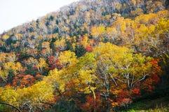 在Nissho通行证在秋天,北海道,日本的秋叶 库存照片