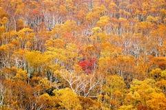 在Nissho通行证在秋天,北海道,日本的秋叶 免版税库存图片