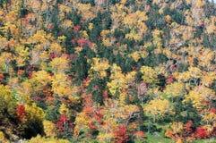 在Nissho通行证在秋天,北海道,日本的秋叶 免版税库存照片