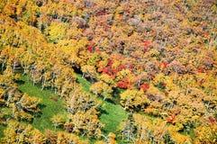 在Nissho通行证在秋天,北海道,日本的秋叶 免版税图库摄影