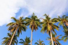 在Nom海岛, Nam Du islands,坚江省,越南的椰子树 免版税库存照片