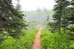 在NorWest森林高涨线索的雾 库存图片