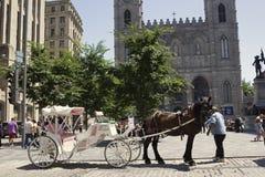 在Notre Dame大教堂前面的用马拉的支架在蒙特利尔 库存照片