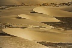 在Nubra谷的沙丘 图库摄影