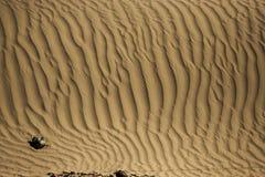 在Nubra谷的沙丘 库存照片