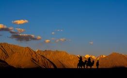 在Nubra谷,拉达克,印度的骆驼乘驾 向量例证