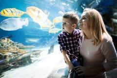 在oceanarium的母亲和儿子观看的海洋生活 库存照片