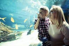 在oceanarium的母亲和儿子观看的海洋生活 图库摄影