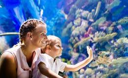 在oceanarium的母亲和儿子观看的海洋生活 免版税图库摄影
