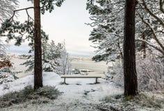 在Odderoya的美好的冬日在克里斯蒂安桑,挪威 在雪盖的长凳,站立在两棵杉树之间 的treadled 免版税库存照片