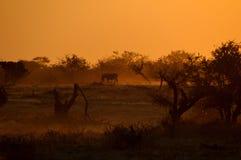 在Okaukeujo waterhole,纳米比亚的日落 库存图片