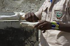 在Oldupai峡谷,坦桑尼亚的化石 库存图片