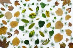 在omposition安排的秋天叶子 从样式上的干燥五颜六色的叶子样式视图 秋天舱内甲板位置构成 库存图片