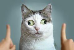 在ophtalmologist appointmet的滑稽的猫 库存照片