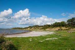 在Oroe的一个蓝旗信号海滩在Isefjorden在丹麦 库存图片