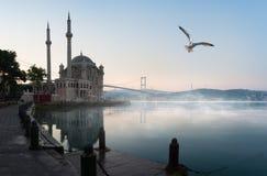 在Ortakoy清真寺的海鸥 免版税库存照片
