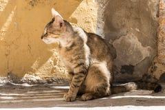 在Ortigia胡同, Siracusa,西西里岛,意大利的离群猫 免版税库存图片