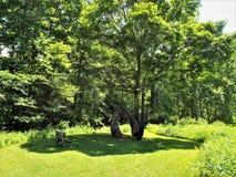 在PA的马蹄形的树 库存照片