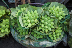 在Pag klong talad的莲花在泰国 库存照片