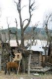 在Pahalgam谷,克什米尔的一匹马 库存图片