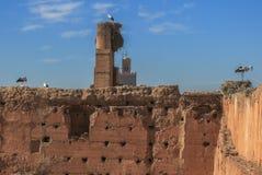 在Palais El巴迪(摩洛哥)的墙壁上的鹳的巢 库存图片