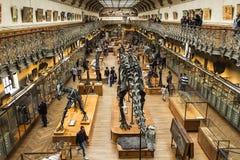 在paleonthology画廊的骨骼在巴黎自然历史博物馆,法国 免版税库存照片