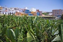 在palma种植园村庄附近的香蕉大la 免版税图库摄影