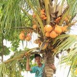 在palmtree顶部的男孩 库存照片