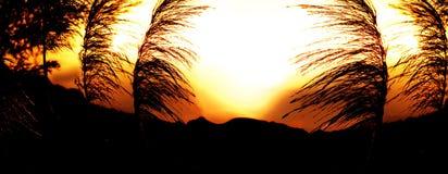 在Palo科罗拉多峡谷的日落 免版税库存图片