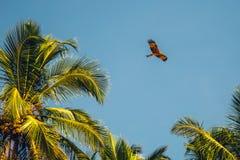 在Palolem海滩,果阿的海滩 免版税库存图片