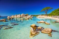在Palombaggia海滩,可西嘉岛,法国的杉树 库存照片