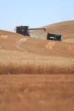 在Palouse的麦子收获,华盛顿 库存照片