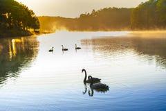 在Pangoung的日出有天鹅的,泰国 免版税库存图片