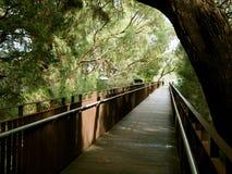 在Park,珀斯,澳大利亚国王的树大道 免版税库存图片