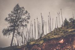 在Paro小山,不丹的传统圣洁佛教祷告旗子 免版税图库摄影
