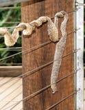 在Paronella澳大利亚的蛇皮 免版税库存照片