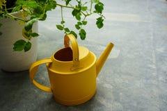 在patato植物旁边的黄色喷壶 免版税库存照片